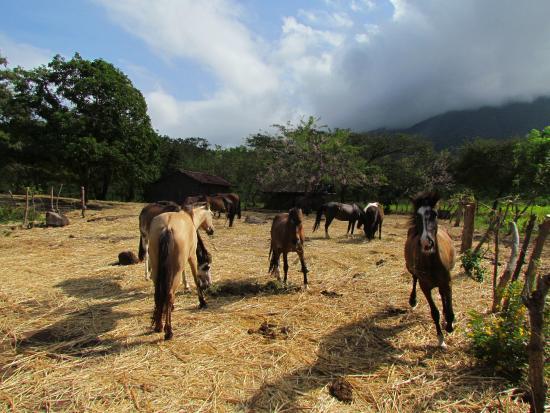 Haris'horses : -
