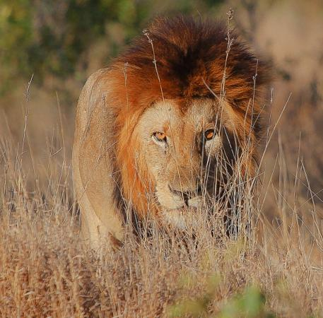 Khakiweed Photographic Safaris: Looking through the grass