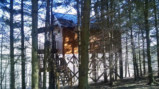 Berlin, OH: Outside of the Whispering Pines Tree House