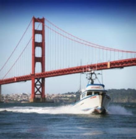 Flash sport fishing charters of san francisco ca for Charter fishing san francisco
