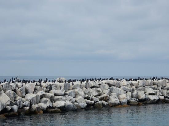 Dana Point, CA: harbor