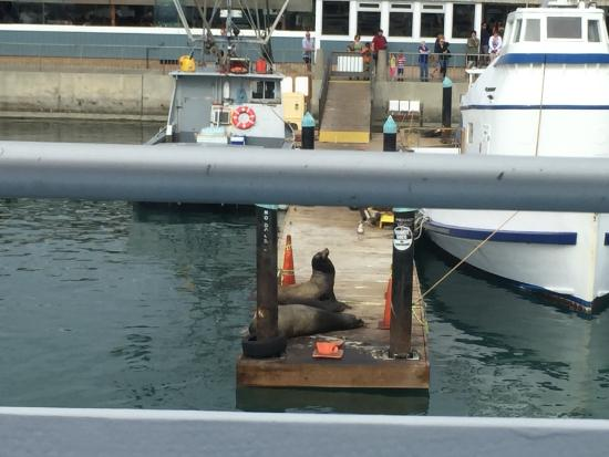 Dana Point, CA: Dock