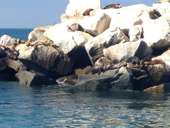 Dana Point, Californië: Sea lions