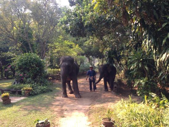 Elephant Life Experience: встреча