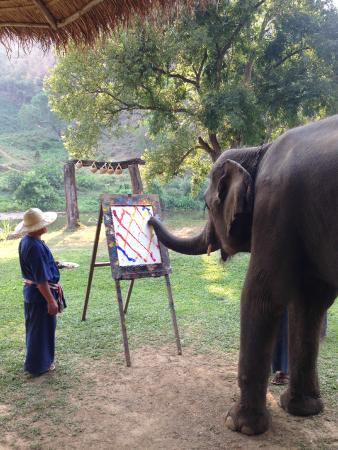 Elephant Life Experience: рисовашки