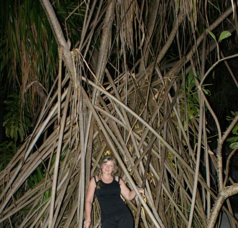 Kuramathi: des arbres