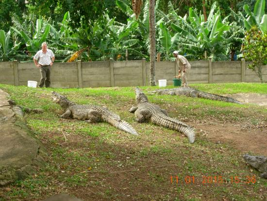 ‪Riverbend Crocodile Farm‬