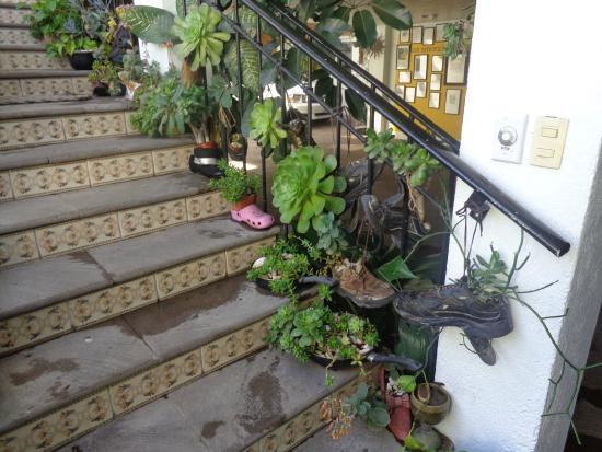 Residencia Sofia: Zapatos como maceteros