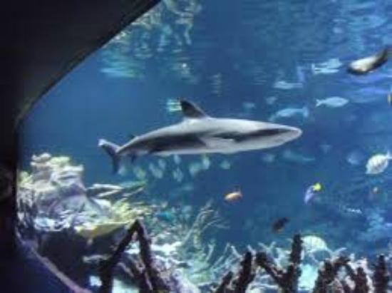 The Largest Aquarium In Europe Has Fish From All Over The World