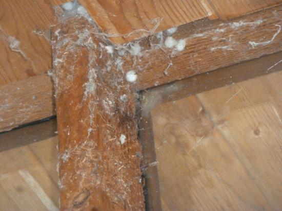 Ford's Cove Marina Waterfront Cottages: Cobwebs in main room