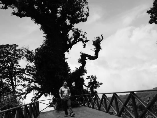 Rancho Makena: huge trees