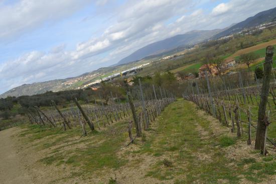 Cantina Berioli: Passeggiando in vigna rounf uno