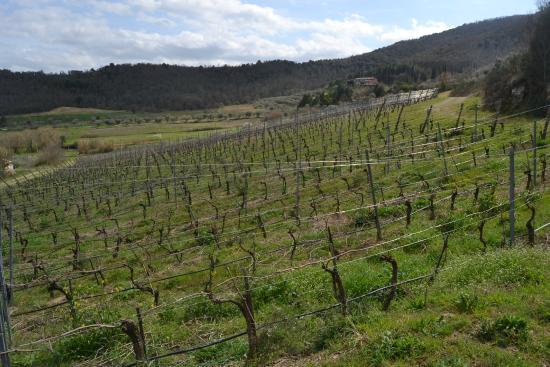Cantina Berioli: Passeggiando in vigna round due
