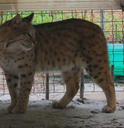 Ears Animal Sanctuary - Picture of Endangered Animal Rescue