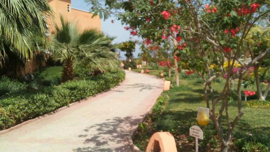 The Three Corners Sunny Beach Resort : Zieleń