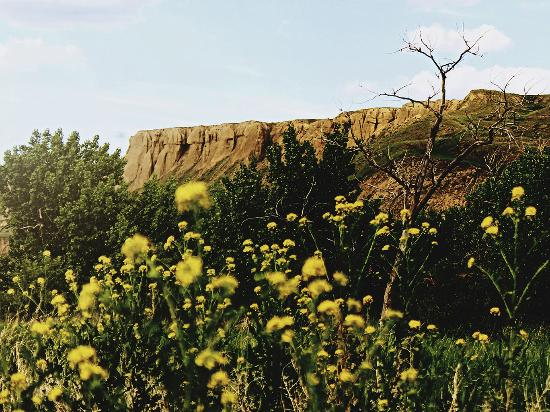 Medicine Hat, Canada: Stroll along the nature trails among ancient cottonwood trees and watch for bald eagles or white