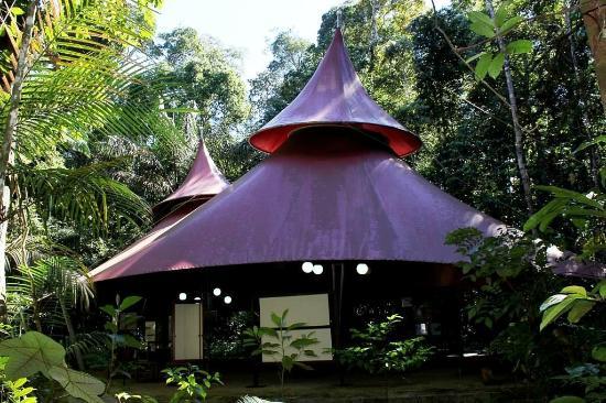 Resultado de imagem para museu na   amazonia