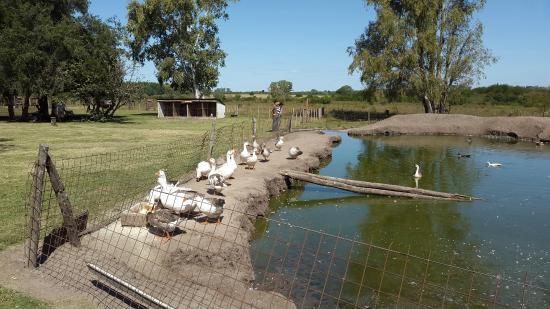 San Jose, Argentina: La charca de los patos y gansos
