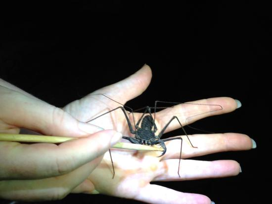 Drake Bay, Costa Rica: a friendly spider, i was told. No I didn't offer to hold him/her.
