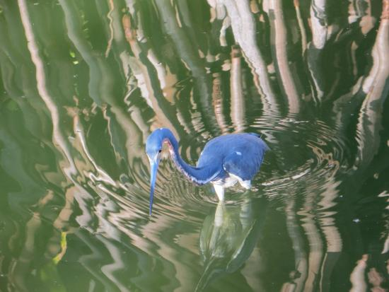 blue hero spa