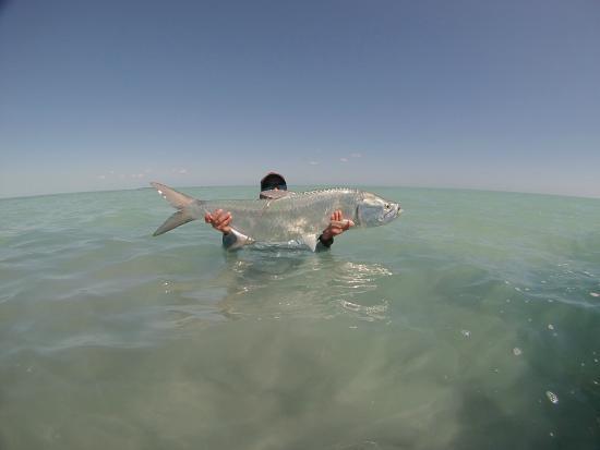 GoFish Belize: Tarpon 2015