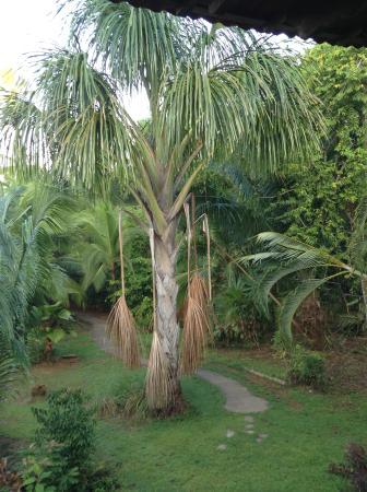 Guaria de Osa Ecolodge: Garden