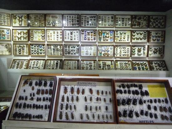 Siam Insect Zoo - Zoo - 23/4 ม.1 ถ.แม่ริม-สะเมิง in Mae Rim, TH - Tips and Ph...