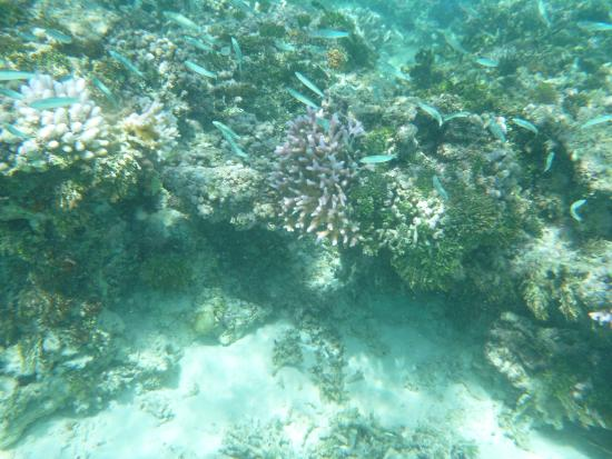 Lawaki Beach House: beautiful reef
