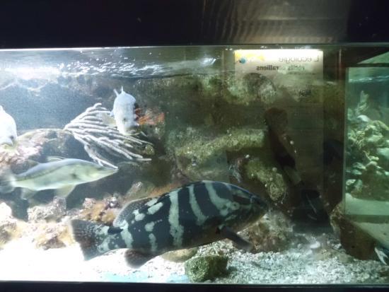 ... epines - Picture of Aquarium de la Guadeloupe, Le Gosier - TripAdvisor