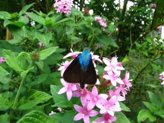 Hotel Desire Costa Rica: Gardens