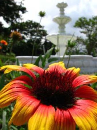 La Catalina Hotel & Suites : Gardens