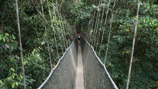 Poring Treetop Canopy Walk canopy walk & canopy walk - Picture of Poring Treetop Canopy Walk Kota Kinabalu ...