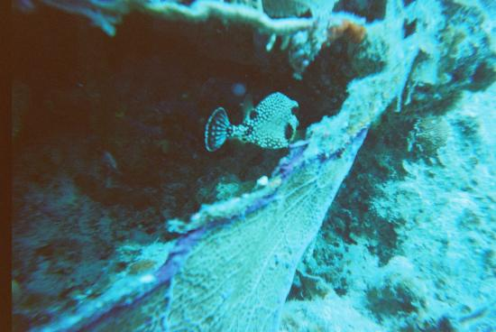 Blue Water Divers: the marine life was just beautiful