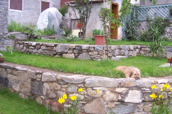 Giardino a terrazzamenti con Trilly - Picture of B&B Via Paradiso ...