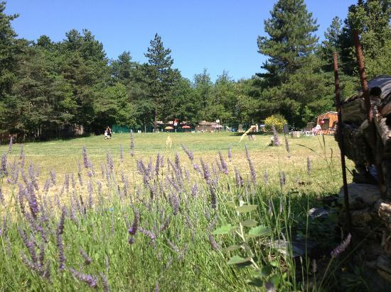 Le Grand Bois : pelouse field