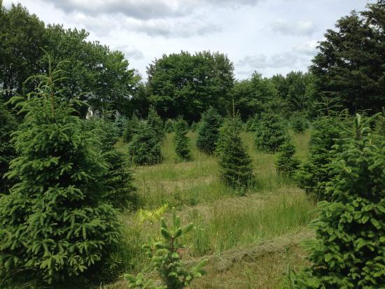 Petersen Farm: A Stroll Through the Trees