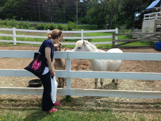 Hope Valley, RI: Pony Rides With Very Friendly Ponies