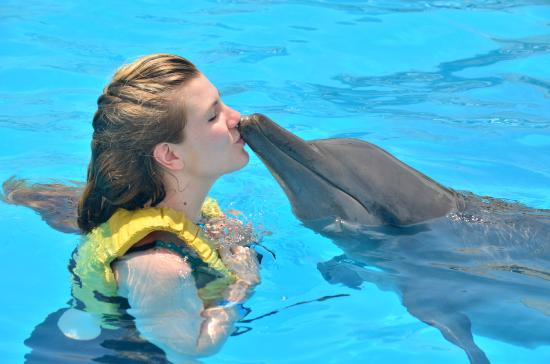 dolphin love swim with dolphins at cancun picture of dolphinaris