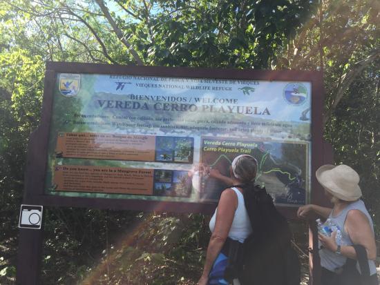 Vieques National Wildlife Refuge: Vereda Cerro Playuela