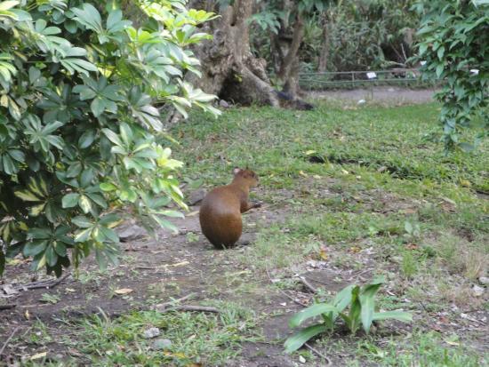 fauna picture of jardin botanico la laguna san salvador