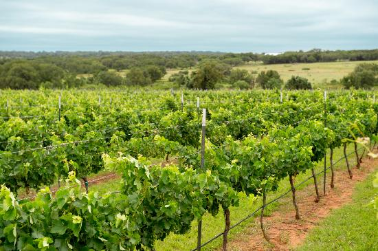 Taste Texas wines at the numerous wineries in and around Fredericksburg.