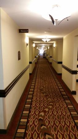 Holiday Inn Express & Suites Tampa USF-Busch Gardens: Corredor de acesso aos quartos.