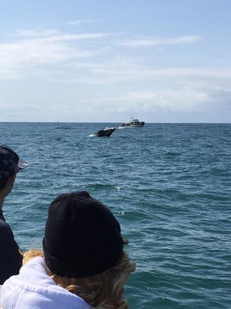 Dockside Charters: A whale breaching, incredible!