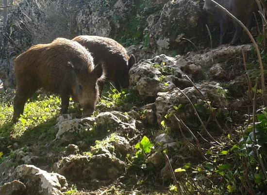 Centro de naturaleza Cañada Verde: JABALIES