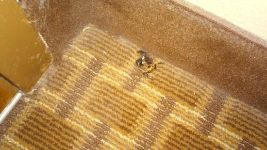 Quality Inn Pensacola: Dead Roach