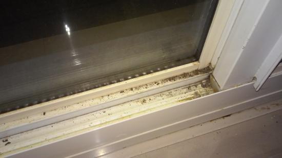 Quality Inn Pensacola: Dirty Windows