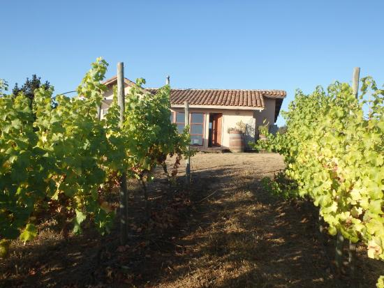 Lo Abarca, Χιλή: Our casita in the vineyard.