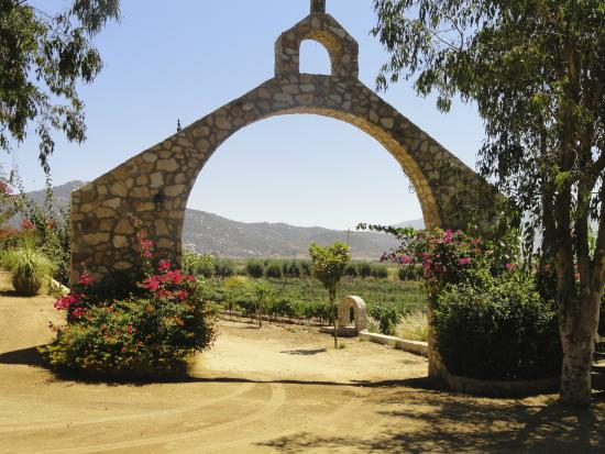 Baja Winery Tours