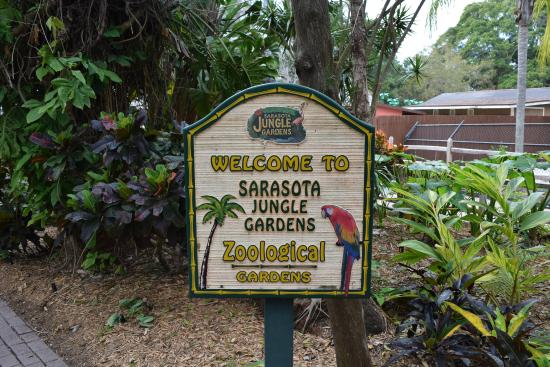 Flamingo Wiese Picture Of Sarasota Jungle Gardens Sarasota Tripadvisor