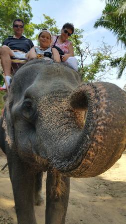Elephant 1 - Picture of Kok Chang Safari Elephant Trekking, Kata Beach - Trip...